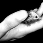 From mice and men: Predicting anti-depressant response