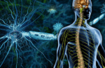 Daclizumab (Zinbryta) approved for the treatment of multiple sclerosis (MS)