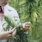 Cannabis als Medizin: Das BfArM richtet Cannabisagentur ein