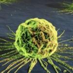 Biomarker-basierte Therapie mit Larotrectinib für alle Krebsarten?