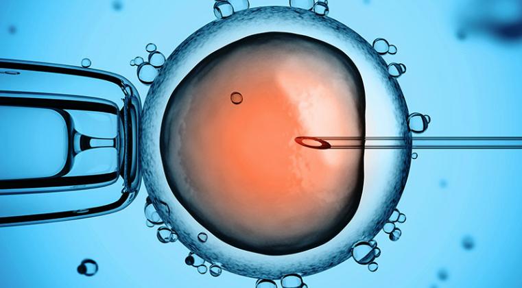 In der Werkstatt: Erste Reparatur einer einzelnen Gen-Mutation in menschlichen Embryonen