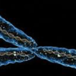 Stuff to read: Why should our Y chromosome disappear, after all?