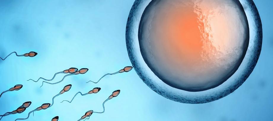 Status der Genetik hinter männlicher Unfruchtbarkeit