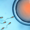Status of genetics behind male infertility