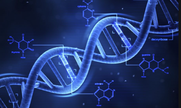 DNA Slider II