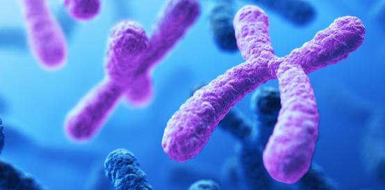 DNA Slider III