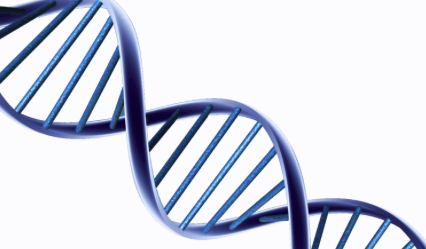 DNA Slider