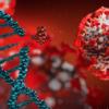 Susceptibilité génétique et loci de gravité de la maladie Covid-19